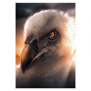 Aluminium Dibond Plexiglas Vulture botanische jungle dieren poster