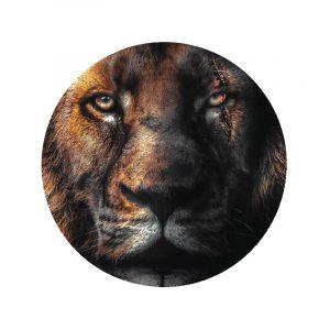 Aluminium Cirkel - Scar Lion