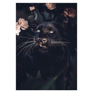 Aluminium Dibond Plexiglas Black Panther Rose botanische jungle dieren poster