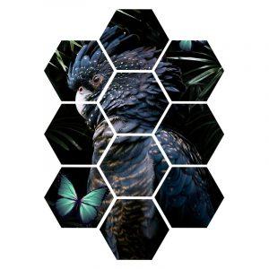 Hexagon - Cockatoo