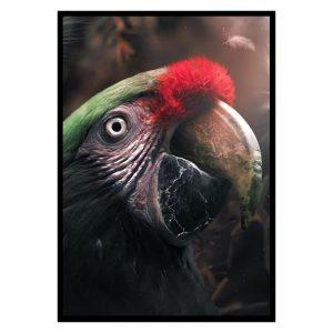 Parrot poster botanisch jungle dieren